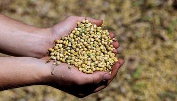 El entramado pyme detrás de la semilla que genera más de 115 mil puestos de trabajo