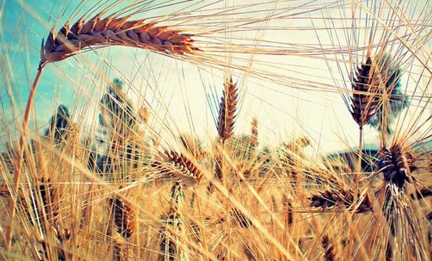 Fuerte aporte de los cultivos secundarios
