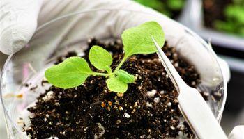 AgriFoodTech: extienden la convocatoria al programa