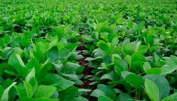La soja se recompuso y tiene buenas chances de completar las siembras pendientes