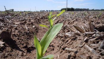 """""""Gran parte de los productores están posicionados para la siembra, con insumos comprados"""""""