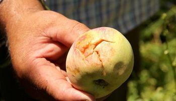 Declaran emergencia agropecuaria en Mendoza, Río Negro y Santiago del Estero