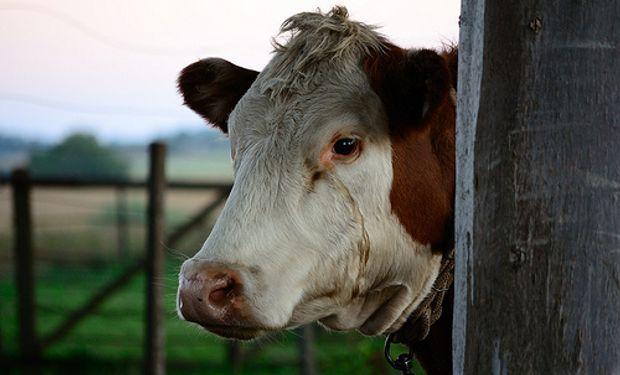 Preocupa la cadena de pago en la ganadería