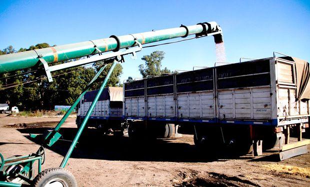 """Empresas agroexportadoras acusan una """"fuerte reducción"""" en la entrega de soja en camión"""