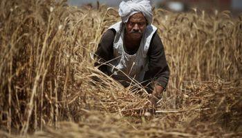 Egipto manifestó su interés por comprar trigo desde Argentina