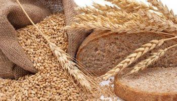 El pan aumentaría un 30% si se eliminan retenciones al trigo