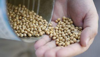 El precio de la soja no detiene su caída ante la falta de novedades desde China