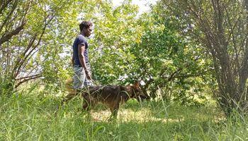 El drama de los productores que por accidente cultivaron los mangos más caros del mundo