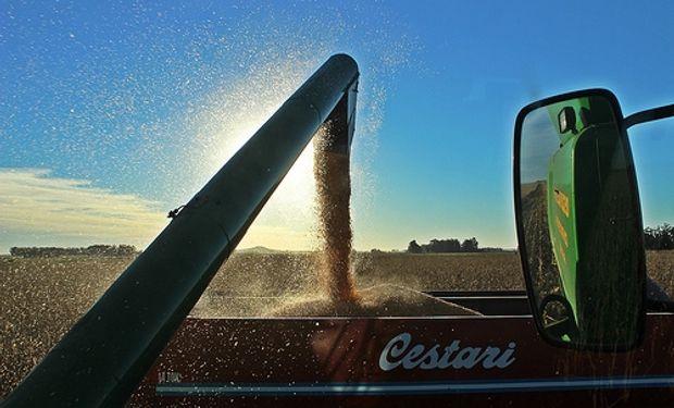 Las mayores exportaciones de soja y maíz explican el 43% del superávit