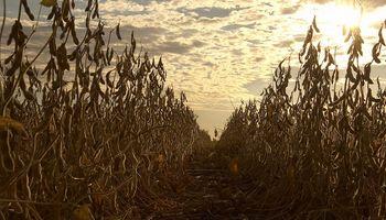 La soja cierra con subas previo al feriado en Estados Unidos