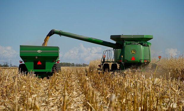 USDA: importante recorte para el maíz.