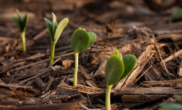 Consejos a la hora de elegir qué variedad sembrar, en qué momento, según la zona y el ambiente.