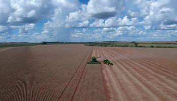 Por la falta de lluvias la cosecha de soja en Brasil ya no será récord