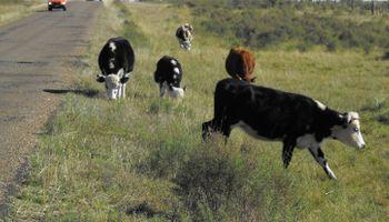 Uruguay declaró 14 millones de hectáreas en emergencia y habilita el pastoreo de animales en rutas por la sequía