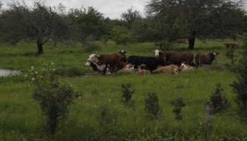 Inundaciones: una serie de medidas permiten atenuar los efectos adversos en ganadería