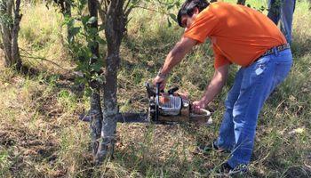 El SENASA erradicó una planta afectada por el HLB en Formosa