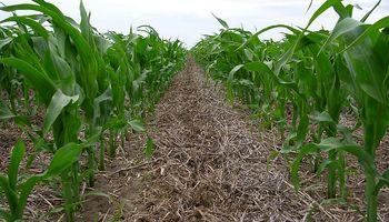 Cuál es el rol del agro frente al cambio climático