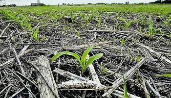 Aapresid presenta un programa para garantizar la sustentabilidad en la producción agropecuaria