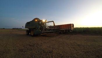 Campaña adelantada en Brasil: la cosecha de soja alcanzó un 36% de la superficie