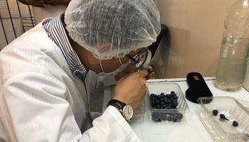 A un paso de exportar arándanos argentinos a China