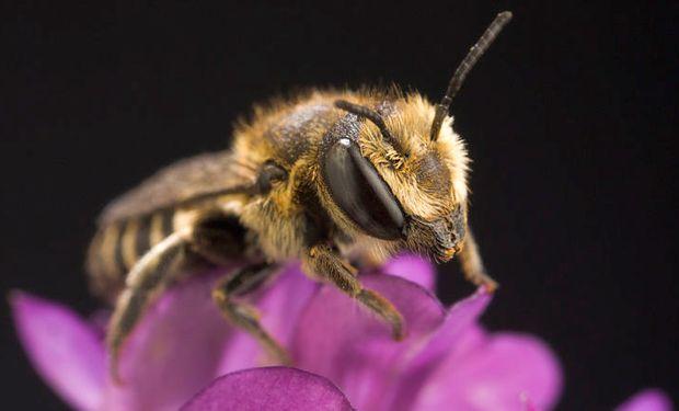 Descubrieron en San Luis el primer nido de abejas hecho enteramente de plástico