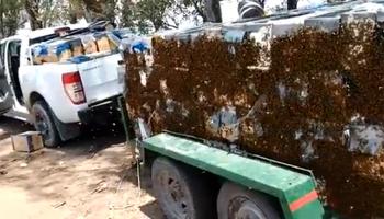 Productor apícola perdió medio millón de pesos por las demoras en los controles interprovinciales en San Luis