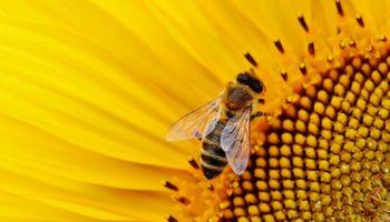 Entre Ríos: Definen acciones comunes para fortalecer la actividad apícola