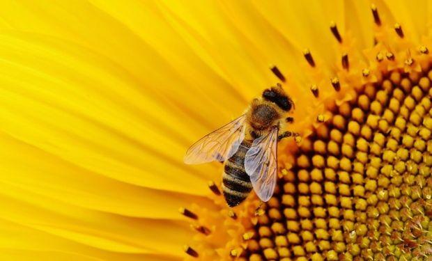 Se trabajará en la sanidad de las colmenas y las medidas de prevención para evitar el ingreso del pequeño escarabajo de las colmenas (PEC).