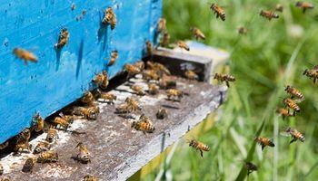 Piden a apicultores denunciar cualquier sospecha del mal del río en colmenas
