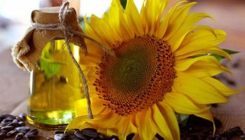 Aumentó un 12% la producción de aceite de girasol en  Buenos Aires