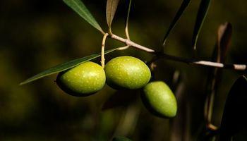 Prohíben la comercialización de un aceite de oliva en todo el país