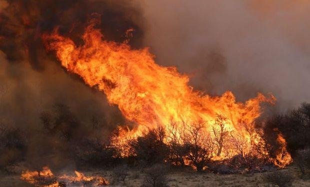 Declaran la emergencia agropecuaria en los campos arrasados por el fuego en Córdoba
