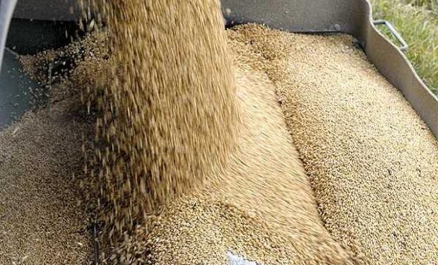 Estimaciones privadas hablan de un incremento en la intención combinada de siembra de maíz, sorgo y girasol en el rango de 1,5 a 3 millones de hectáreas.