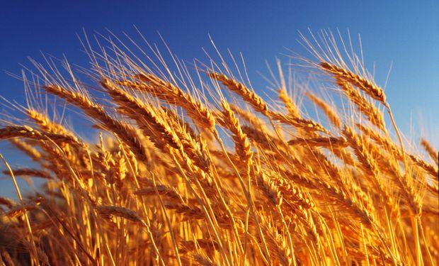 Financiarán la compra de trigo a los molinos