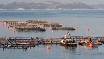 Por qué la acuicultura seguirá creciendo a nivel mundial