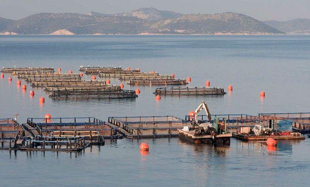 Consumo de pescado por persona fue de 20,5 kilos anuales 2015.
