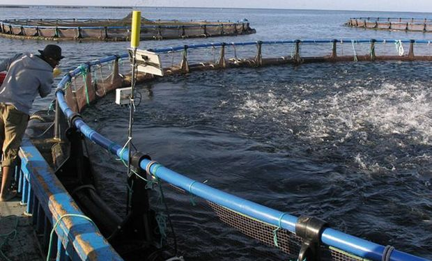 Existe un aumento de las inversiones en la acuicultura, en especial en tecnologías para mejorar la productividad.