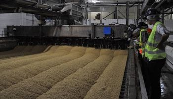 Advierten sobre la futura calidad de la cebada cervecera