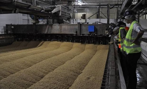 Se necesitan granos de calidad, de buen calibre y tenor proteico.