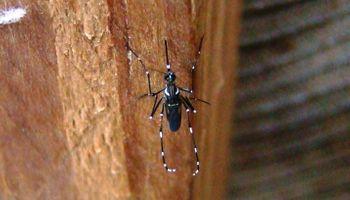 El Dengue y sus dos caras: cómo prevenirlo y controlarlo