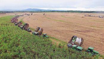 Ledesma finalizó la zafra con una producción de azúcar 7% más baja que la de 2016