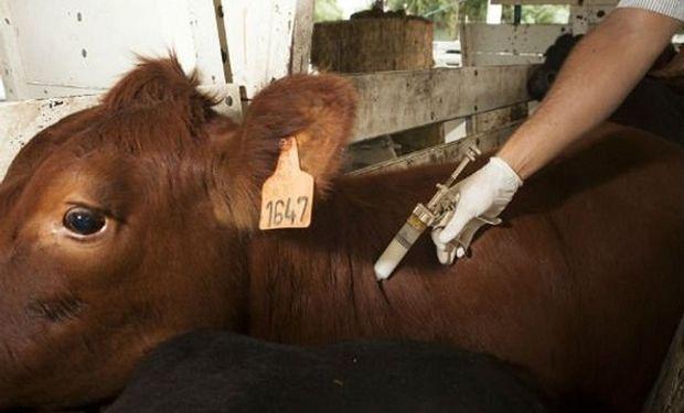 Permiten el movimiento de hacienda sin vacunación contra la aftosa