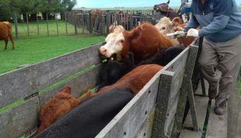 Más de 52 millones de bovinos fueron vacunados contra la fiebre aftosa