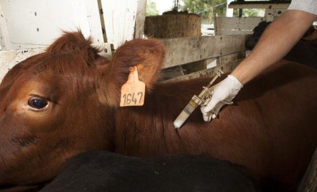 Al finalizar la campaña de vacunación se inocularon 4.427.128 cabezas en 27.231 establecimientos ganaderos de la provincia.