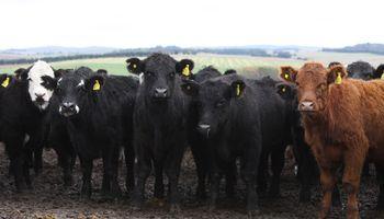 Aftosa: en pocos meses el campo vacunó a más de 50 millones de bovinos