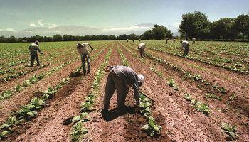 Se confirmó el bono de $5000 para los trabajadores rurales