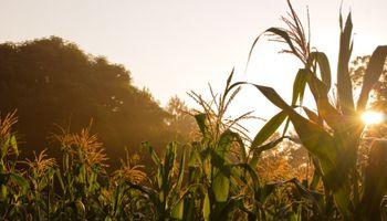 """""""Tenemos que generar valor agregado al maíz"""""""