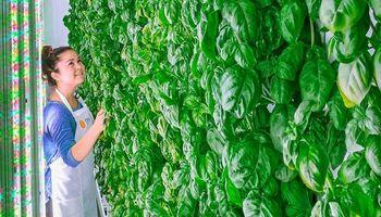 Los alimentos del futuro según el mayor fondo de inversión del mundo