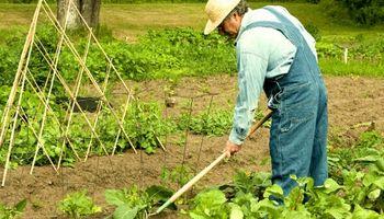 Agroindustria respondió preguntas sobre el monotributo social agropecuario