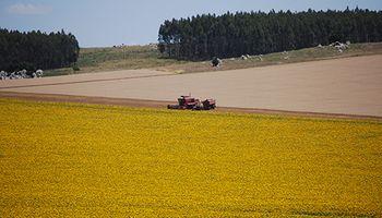 Decisiones precisas: cómo pensar la agricultura del futuro